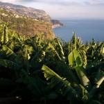 GESBA (Banana da Madeira)